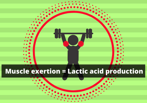 Prevent Lactic Acid Buildup-Exercise, Rest, Eat, Repeat