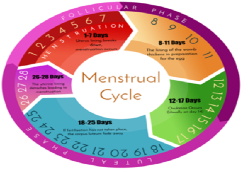 All you should know about menstrual cycle